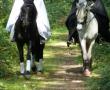 pferd-066