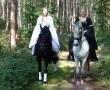 pferd-068