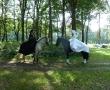 pferd-079