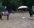 pferd-153