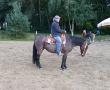 pferd-154