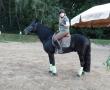 pferd-177