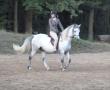 pferd-184