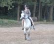pferd-185