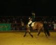 hund-und_pferd-2010-1