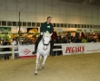 hund-und_pferd-2010-15