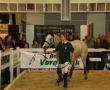 hund-und_pferd-2010-18