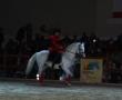 hund-und_pferd-2010-30
