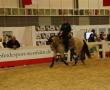 hund-und_pferd-2010-48