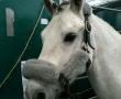 Hund & Pferd 2012