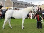 Glencarrig Princess, auch Siegerstute ihrer Klasse in Clifden 2013