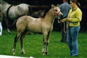 dr doolittle pony