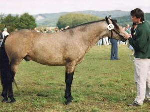 FN-Reserve-Bundessiegerhengst Cloppenburg 1998