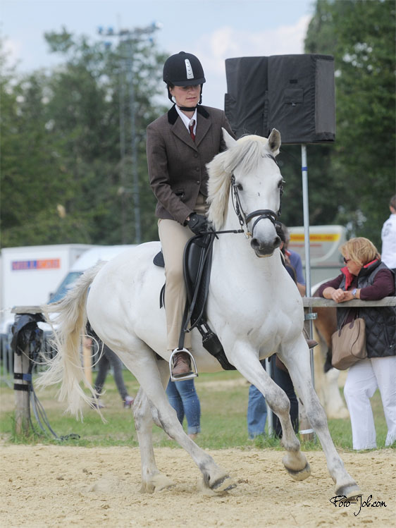 connemara pony vereinigung